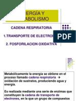 5 Cadena Respiratoria