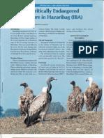 Vulture Conservation Hazaribag