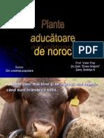Plante+Aducatoare+de+Noroc
