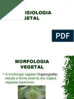 Anatofisiologia Vegetal (2)