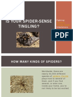 Is Your Spider-Sense Tingling - Fighting Common Florida Spider Infestations
