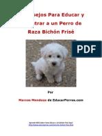 4 Consejos Para Educar y Adiestrar a un Perro de Raza Bichón Frisé