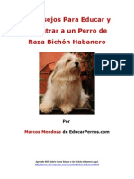 4 Consejos Para Educar y Adiestrar a un Perro de Raza Bichón Habanero