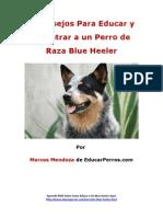 4 Consejos Para Educar y Adiestrar a Un Perro de Raza Blue Heeler