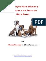 4 Consejos Para Educar y Adiestrar a Un Perro de Raza Boxer