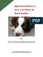 4 Consejos Para Educar y Adiestrar a un Perro de Raza Bretón