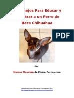 4 Consejos Para Educar y Adiestrar a Un Perro de Raza Chihuahua