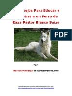 4 Consejos Para Educar y Adiestrar a Un Perro de Raza Pastor Blanco Suizo