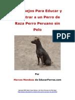 4 Consejos Para Educar y Adiestrar a Un Perro de Raza Perro Peruano Sin Pelo