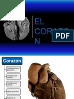 El Corazon1