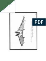 الخفاش يصطاد طريدته(1)