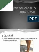 Bursitis Del Caballo (Higroma)