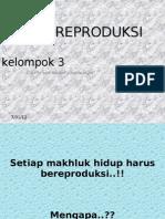 sistm reproduksi kelompok 4