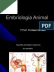 Embriologia Geral