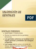 Exp de Genitales Vag