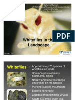 Whitefly in the Landscape 1.11 Florida