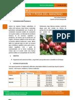 Boletín técnico poda de Duraznos