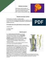 Preparacion Prueba Sistema Nervioso (Tercero Medio)