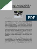 Juan Gonzalo Bufalo 6 Embriones Producidos in Vitro en Bufalo de Agua