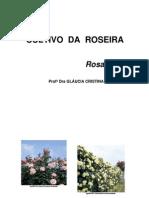 Cultivo Da Roseira