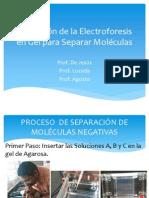 Laboratorio Utilización de la Electroforesis en Gel para Separar