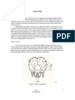 Animal Vision Essay