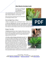 10 Best Tips for Growing Cycads