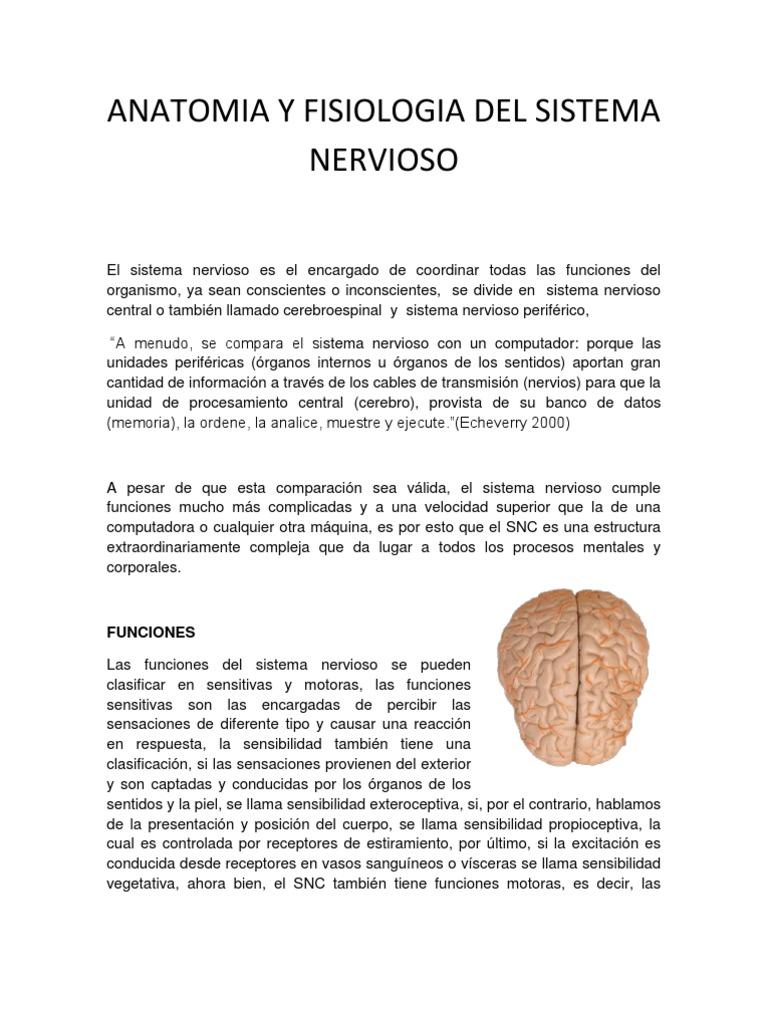 Moderno La Anatomía Y Fisiología Del Cerebro Composición - Imágenes ...