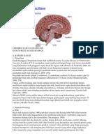 Askep Cerebro Vascular Disease