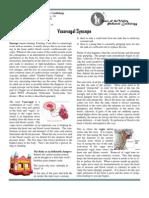 Vasovagal Syncope 3.0