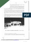 Plan de acción  de conservación de la población de yaguareté en la provincia de Misiones.3era.parte