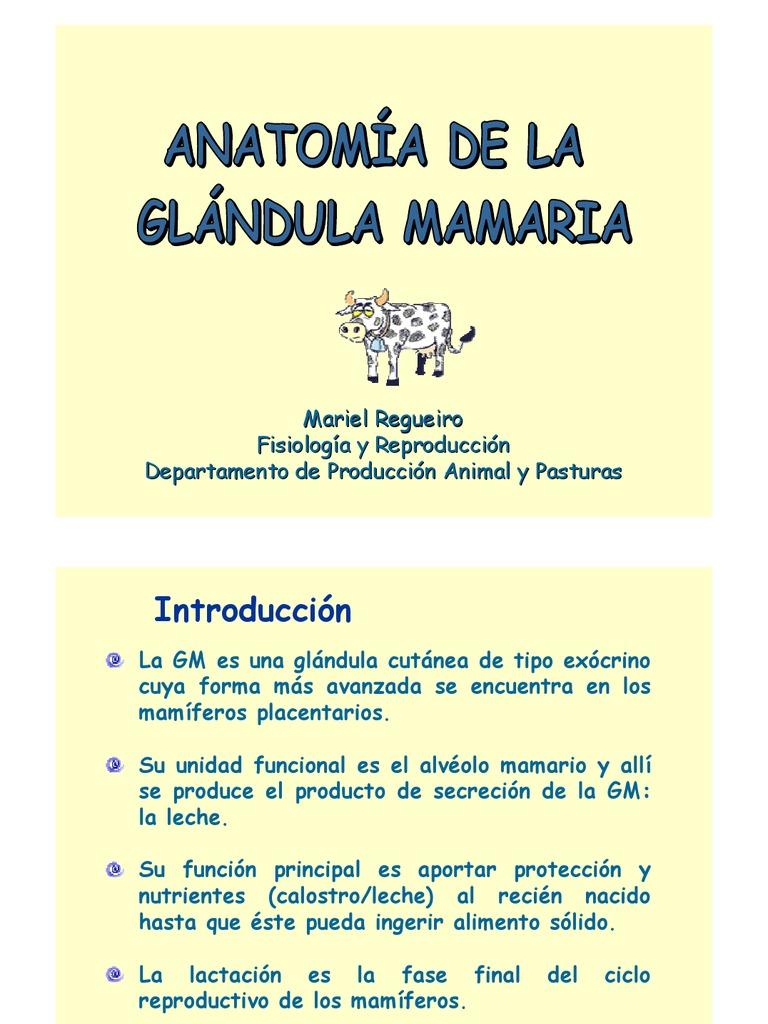 Anatomia de La Glandula Mamaria