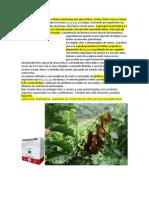 A mancha aureolada é uma doença bacteriana que ataca folhas