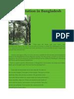 Tree Plantation in Bangladesh