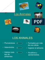 Vertebrados e Invertebrados 1216299669737918 9
