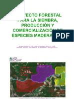 Guia Forestal