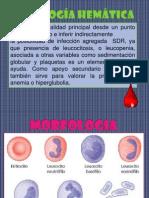 citologia hematica