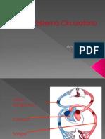 Sistema Circulatorio 2011