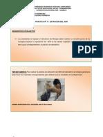 PRACTICA DE LABORATORIO DE BIOLOGIA UFPS N° 11
