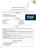 Protocolo DNA