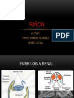 Anatomia Embriologia Fisiologia Renal