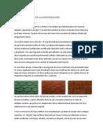 Teja Asfaltica Proyecto