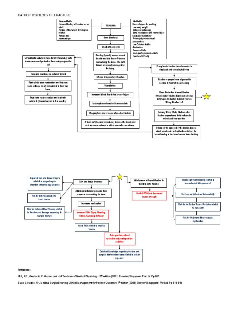 Pathophysiology of Fracture | Bone | Inflammation