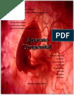 Embriologia  Urogenital