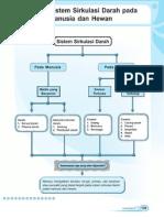 5. Sistem Sirkulasi Darah Pada Manusia Dan Hewan