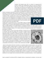 Clase Nucleo Interfasico