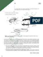 amphibios biologia