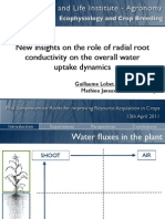 Root radial conductivity