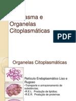 Citoplasma e Organelas Citoplasmaticas