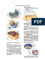 Anatomi Dan Fisiologi Sel Tubuh Manusia